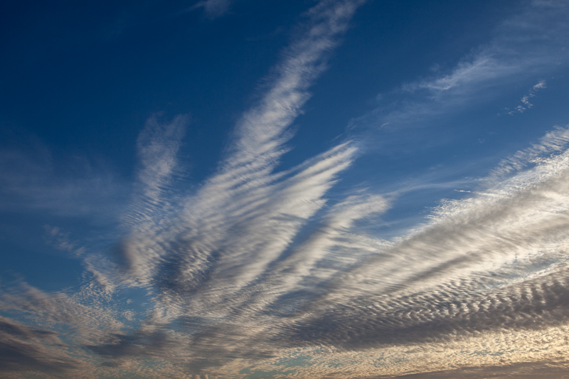 Coco_2011_Feathers_in_the_Sky
